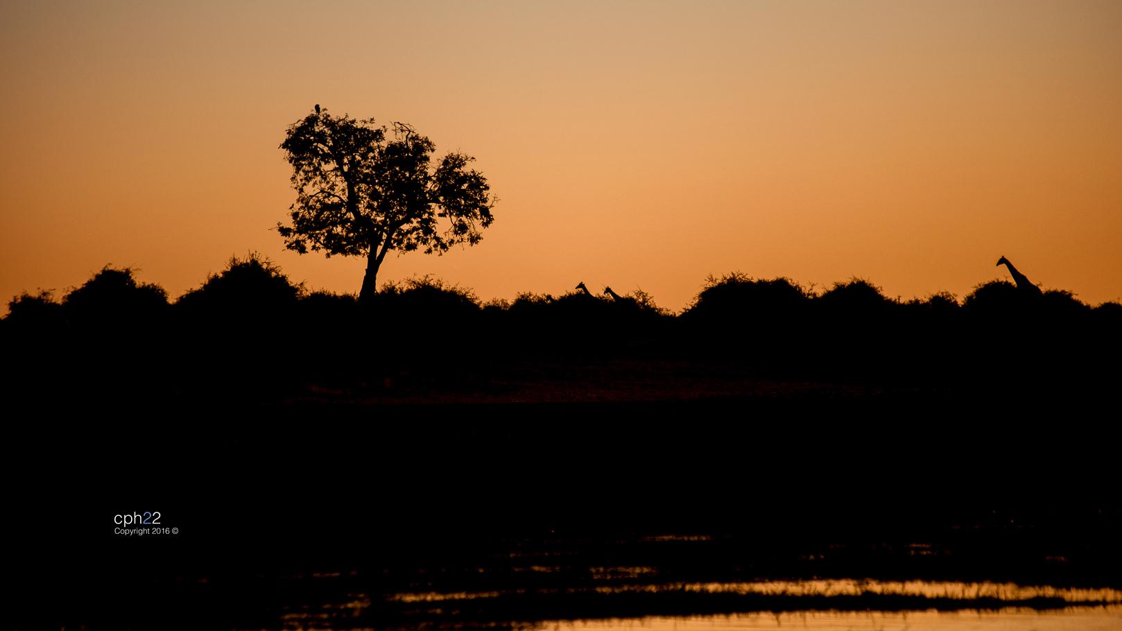 Atardecer Botswana II